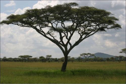Экология, деревья