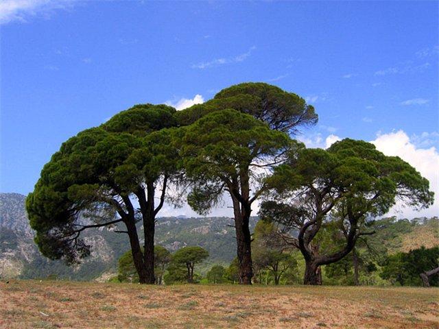 Природа, экология леса