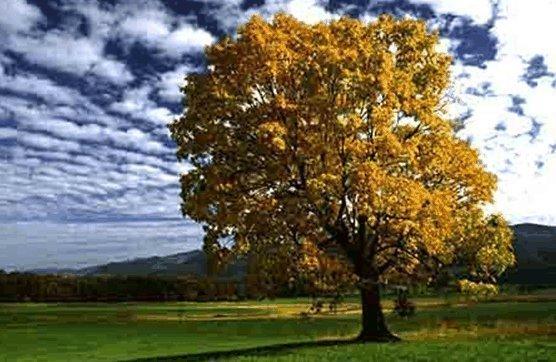 Значение деревьев, экология
