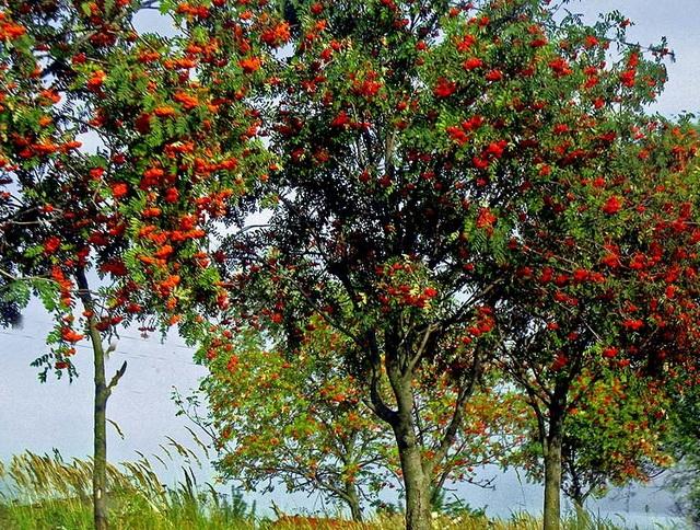 Экология природы, деревья