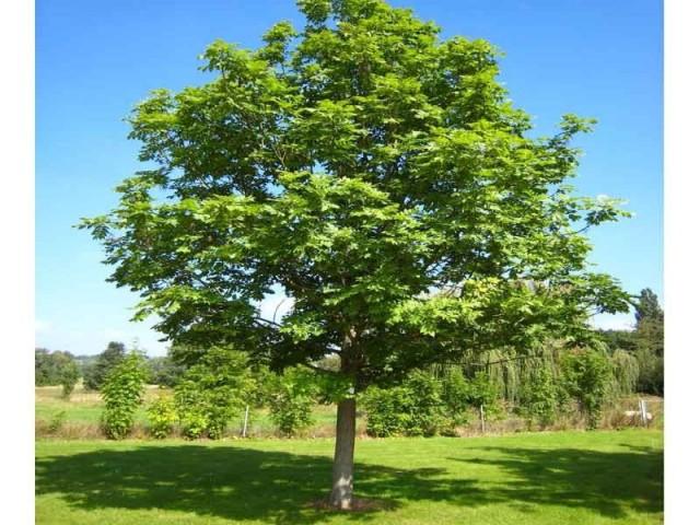 Экология леса и природы