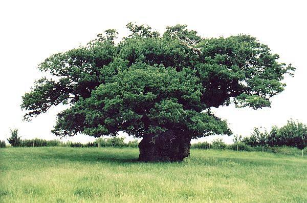 Экология леса