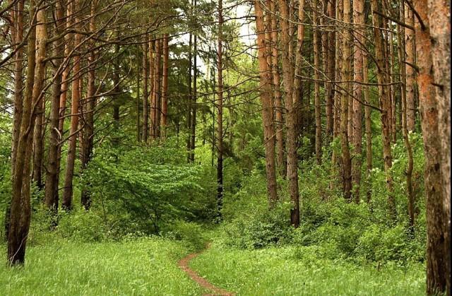 Экология леса, природа