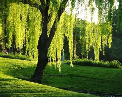 Контакт с деревьями